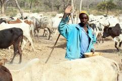 Un troupeau et son berger